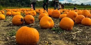 Local Pumpkin Farms In Nj by Your Fall 2017 Philadelphia Area Pumpkin Picking Guide