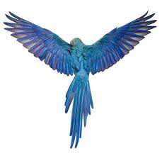 25 bird wings ideas art reference bird