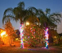 queen palms syagrus romanzoffiana wrapped in colorful led