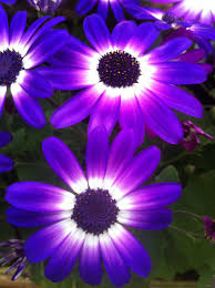 purple and blue flowers blue purple white flowers by rdsadams on deviantart