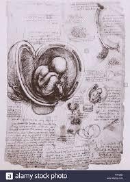 anatomical sketch by leonardo da vinci 1452 1519 italian