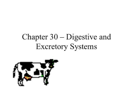 c mcgraw hill ryerson the digestive and excretory systems