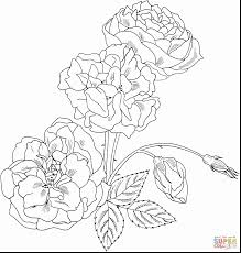 incredible skull roses tattoo coloring pages with roses coloring