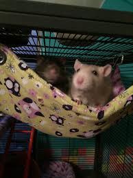 Cheap Rat Cage The Rat Lady Toy Ideas Cage Ideas Food Ideas Pet Rat Ideas