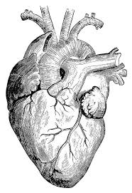 He Made Accurate Drawings Of The Human Anatomy Best 25 Heart Drawings Ideas That You Will Like On Pinterest