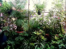 miloni chatterjee u0027s balcony garden new delhi secret garden