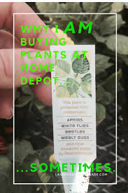 why i u0027m sometimes buying plants at home depot and how lavende