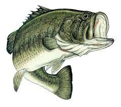 cool bass fish tattoo