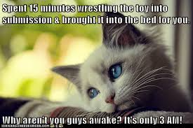 Memes First World Problems - animal memes first world cat problems the sun s not even out yet