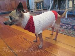 hartwood roses pattern for winnie u0027s tiny knitted dog sweater