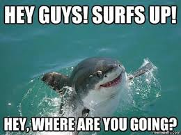 Where Are You Memes - catch these funny surfing memes thechive