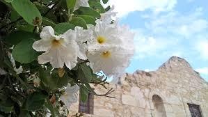 top ten native plants of texas and mexico garden style san