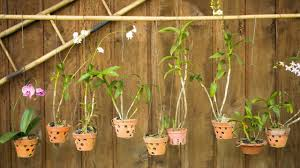 fertilising tips for indoor gardening homemade pests things