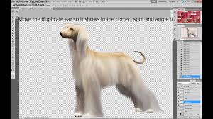 afghan hound afghan hound editing tutorial in ps the sims 3 youtube