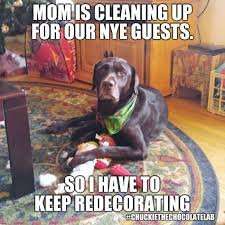 resume templates janitorial supervisor meme dog funny memes clean chuckie the chocolate lab chuckie the chocolate lab pinterest