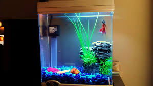 Betta Tank Decor Ideas