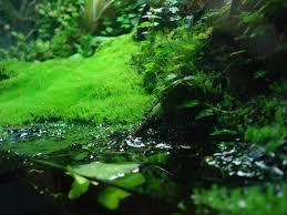 opinions on the best vivarium moss dendroboard