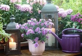 balkon grã npflanzen bienenfreundliche balkonpflanzen das lieben bienen bee careful
