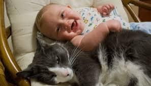 gerüche die katzen nicht mö katze an baby gewöhnen 5 ultimative tipps cat news net
