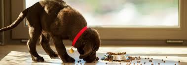 choosing a natural ingredient dog food hill u0027s pet