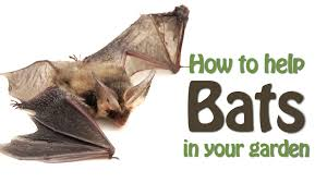 the wildlife garden project how to help bats in your garden