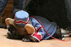 Flying Monkey Costume Tahoma French Bulldogs