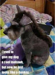 Cool Dog Meme - dog with a cool mohawk picture