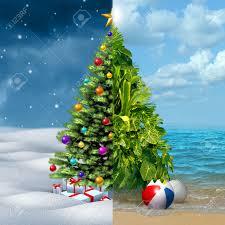 tropical christmas stock photos royalty free tropical christmas