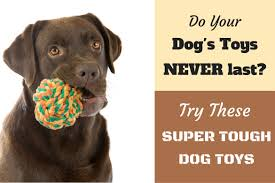 10 best toughest durable dog toys for heavy chewers