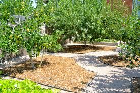 astonishing small backyard orchard photo ideas amys office