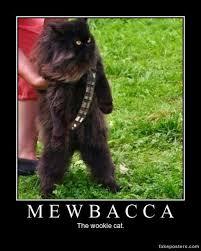 Chewbacca Memes - 51 cat chewbacca costume gallery for chewbacca cat costume