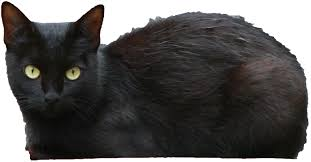 halloween png transparent black scary halloween cat png image