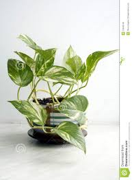 House Plant Green House Plant Royalty Free Stock Image Image 13643146