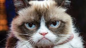 Angry Cat Meme - grumpy cat image gallery know your meme