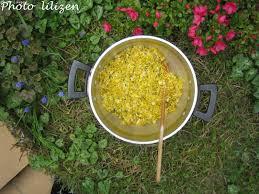 cuisiner le pissenlit avril les trésors du pissenlit lilizen cuisine