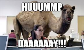 Hump Day Camel Meme - do you know what day it is it s tuesday go home camel you re