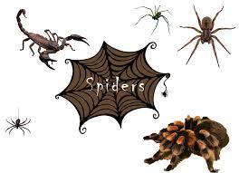halloween animals the cove rattler