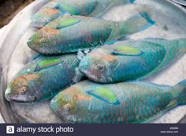 rainbow fish fish market na thon ko samui thailand south