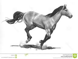 mustang horse drawing horse pencil drawing mustang horse pencil drawing art print signed