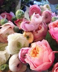 homepage lily matilda flowers