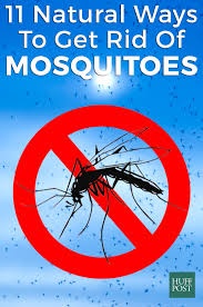 how to get rid of mosquitoes testing 11 homemade remedies huffpost