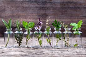 herbs indoors 10 herbs you can grow indoors in water all year long