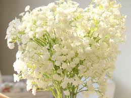 bulk baby s breath gypsophila babys breath bulk flower seeds for growing view babys