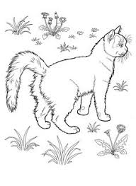 tabby cat coloring pages kitty cat coloring pages coloring pages for y u pinterest