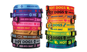 personalized collar collars groupon