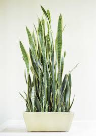 Best Indoor Plants For Oxygen by The Best Indoor Plants Home Design Ideas