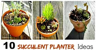 rustic succulent planters these plants can really take the heat