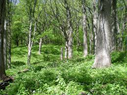 Iowa forest images Practical biology science for everyone mid may eastern hardwood JPG