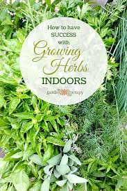 herbs indoors how to grow herbs indoors successfully garden therapy