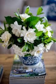 Gardenia Delivery 135 Best Gardenia Mi Flor Favorita Images On Pinterest Gardenias